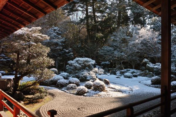 winter garden #3