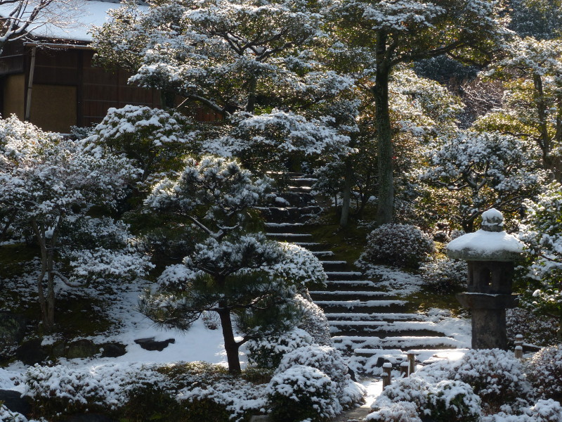 winter garden #5