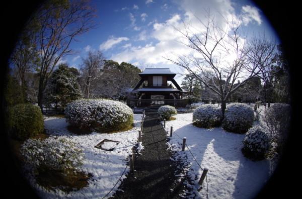 winter garden #6