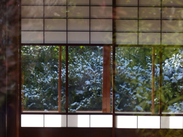 winter garden #9