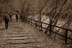 abandoned railroad #3