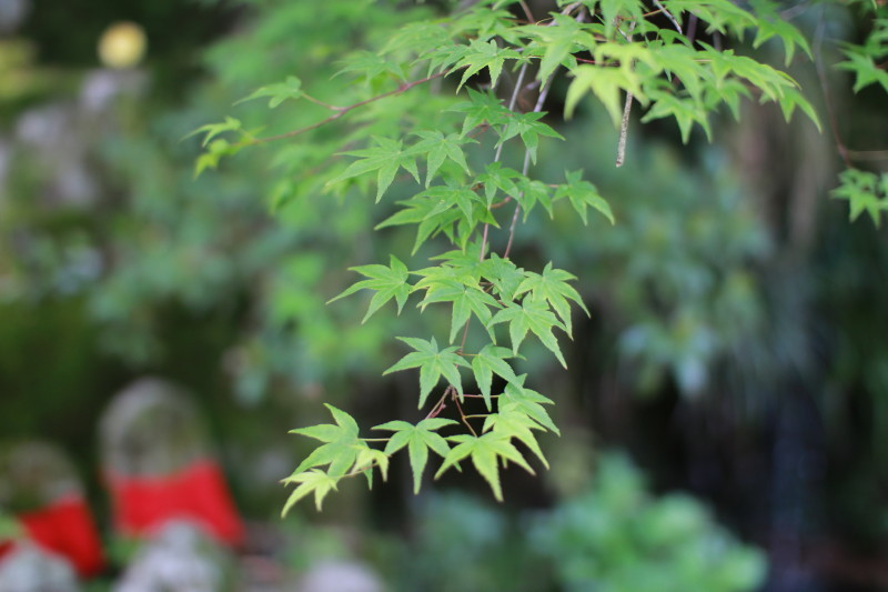 May Green #2