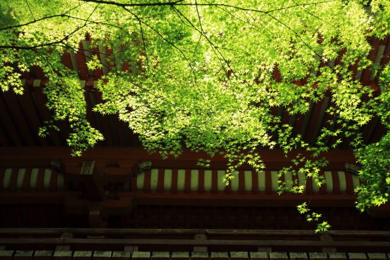 May Green #5