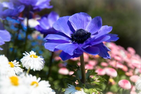 Spring color #5