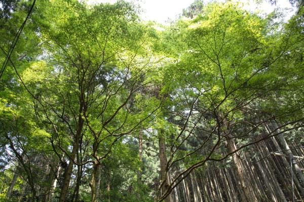 May Green #9