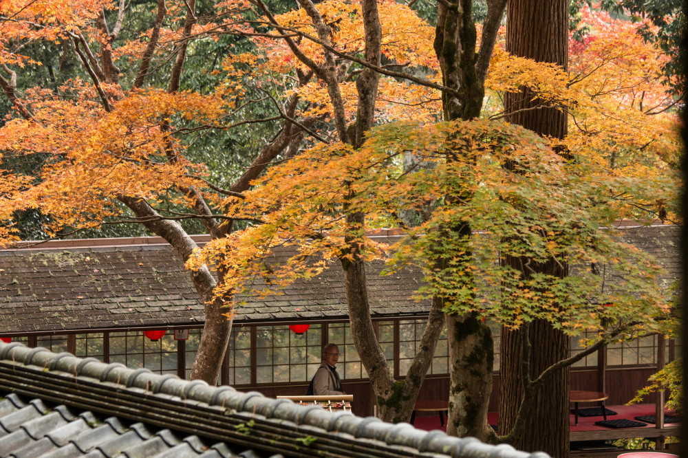 season of warm colors #1