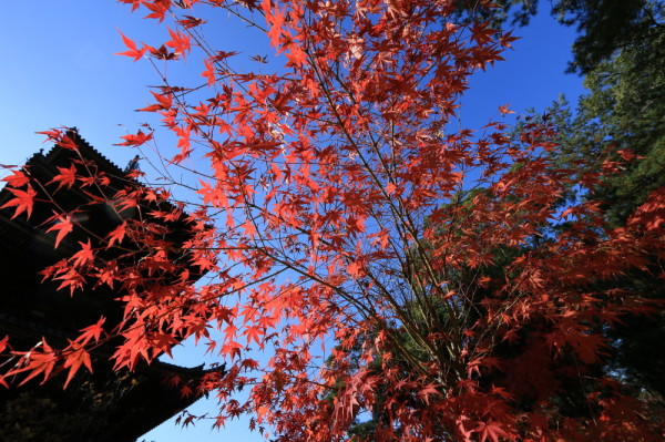 Pagoda and leaves #3