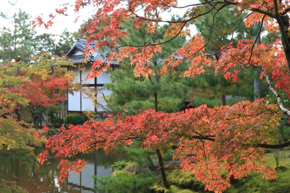 autumnal magic #1