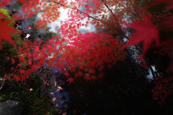 autumnal magic #3