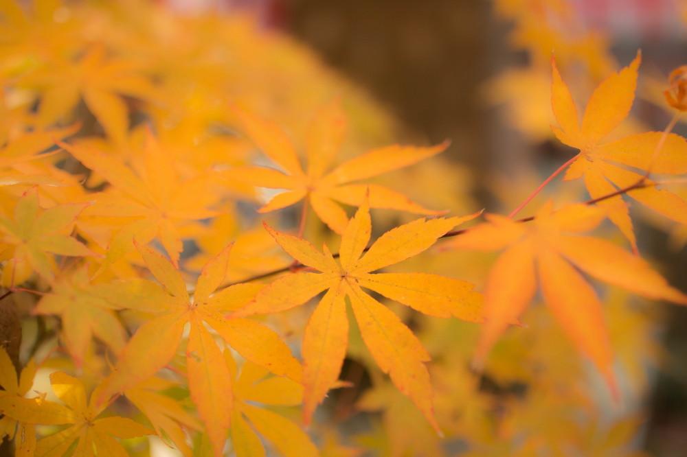 Fabulous colors in November #7
