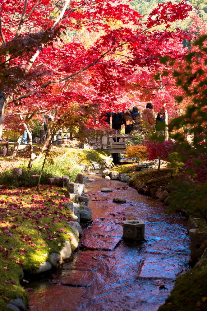 Fabulous colors in November #10