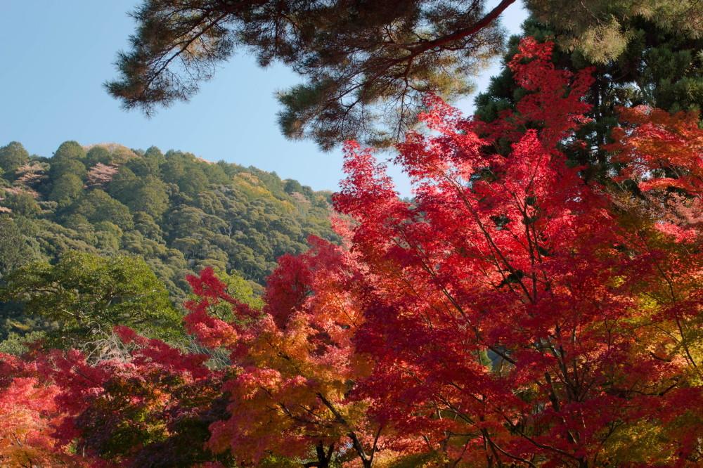 Fabulous colors in November #12