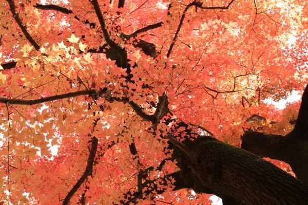 Fabulous colors in November #15