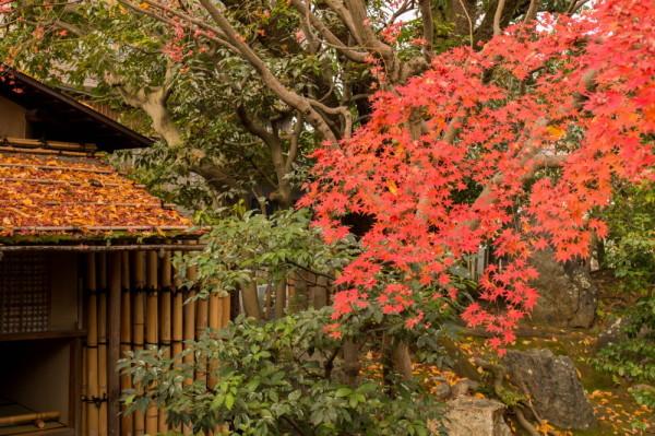 Fabulous colors in November #18