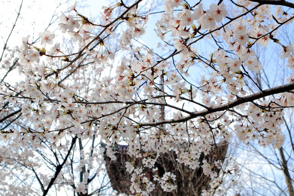 through blossoms...