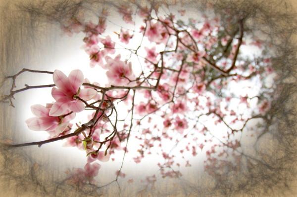 Aminus3 Color Featured photo magnolia - bottom view | 28 April 2015