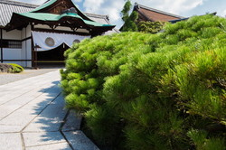 entrance with dragon pine