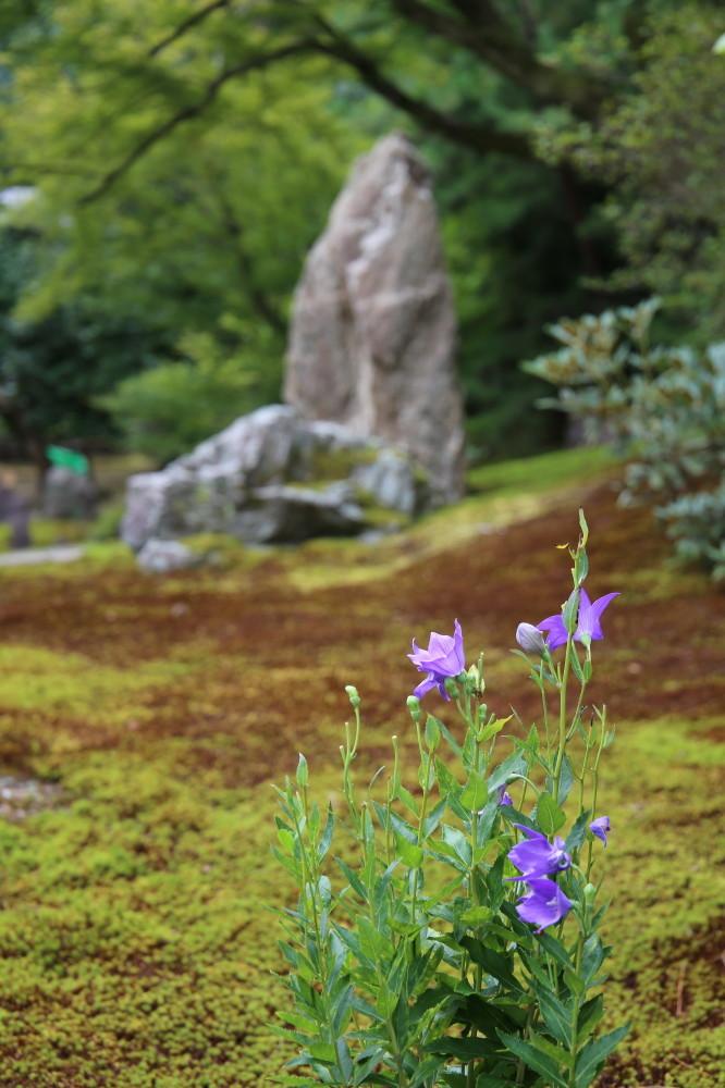 Rock'n'flower #1