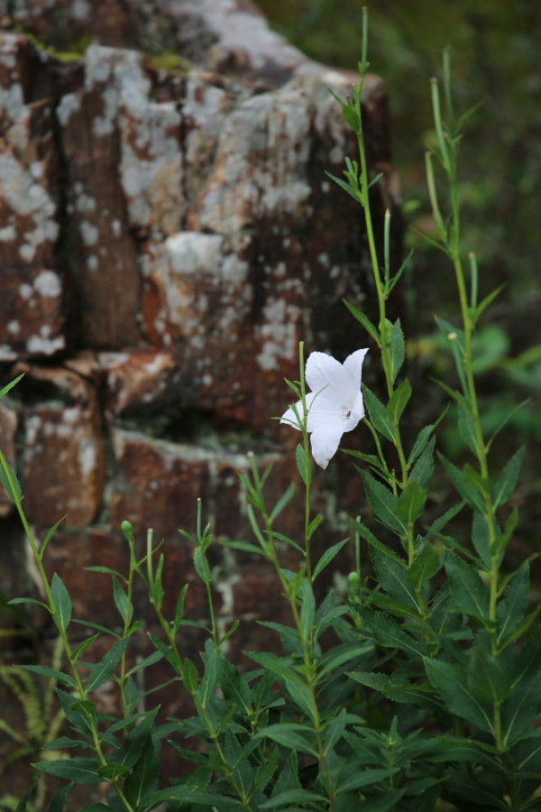 Rock'n'flower #2