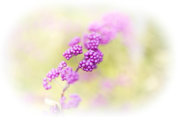 autumnal colors -purple-