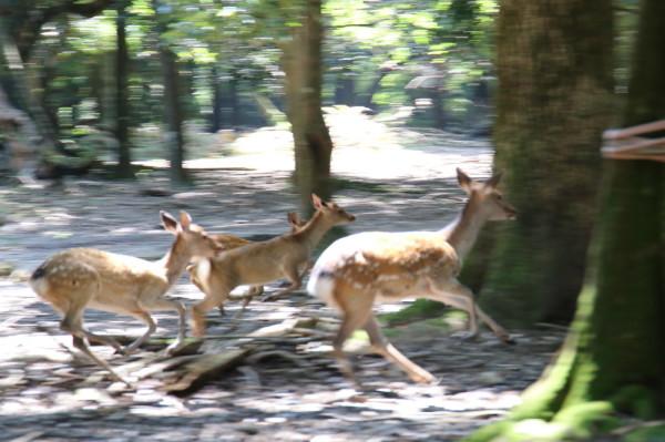Deer, divine messenger #2
