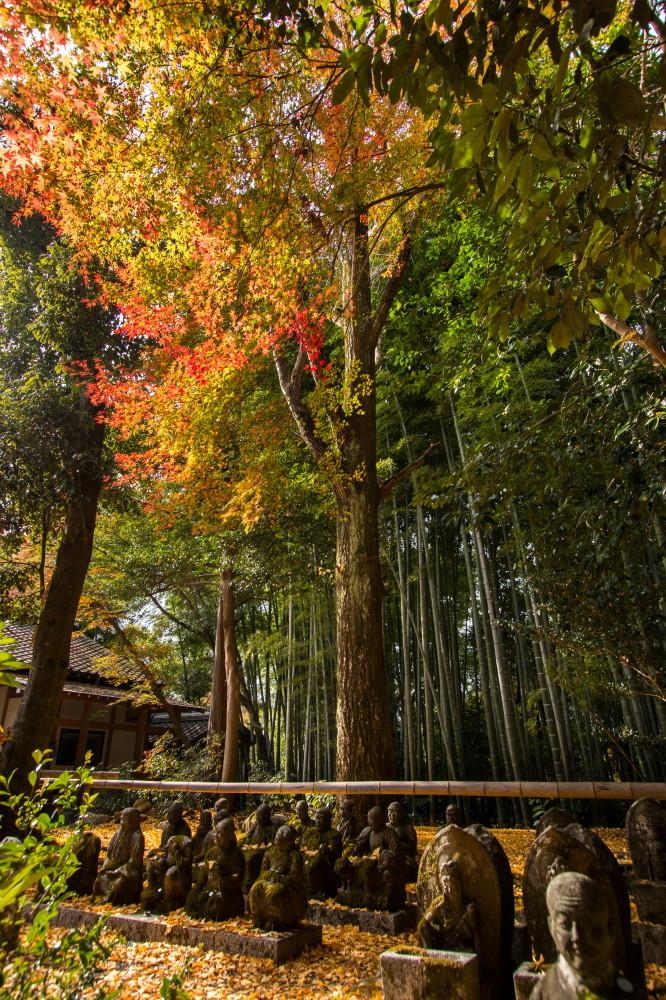 meditation under autumn leaves