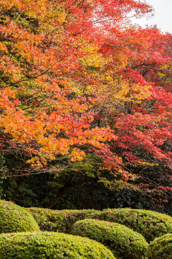 Garden of colors #5