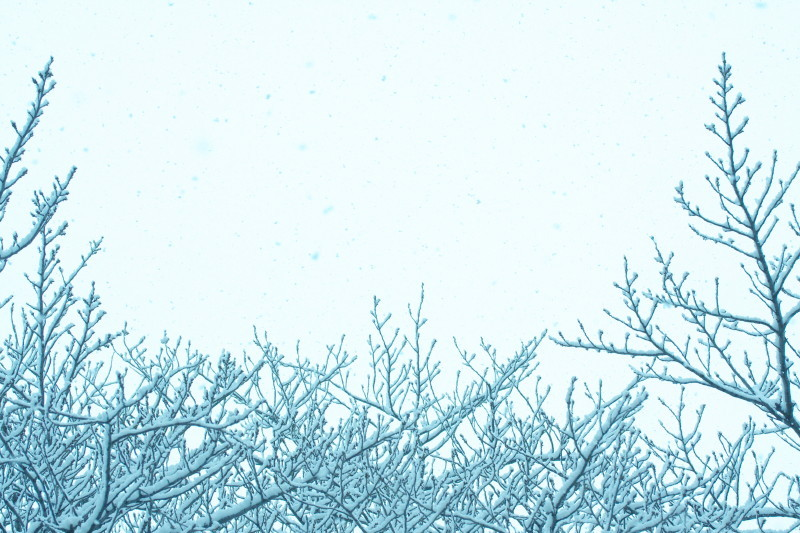 snowfall #2