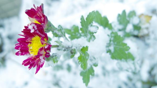 snowfall #3