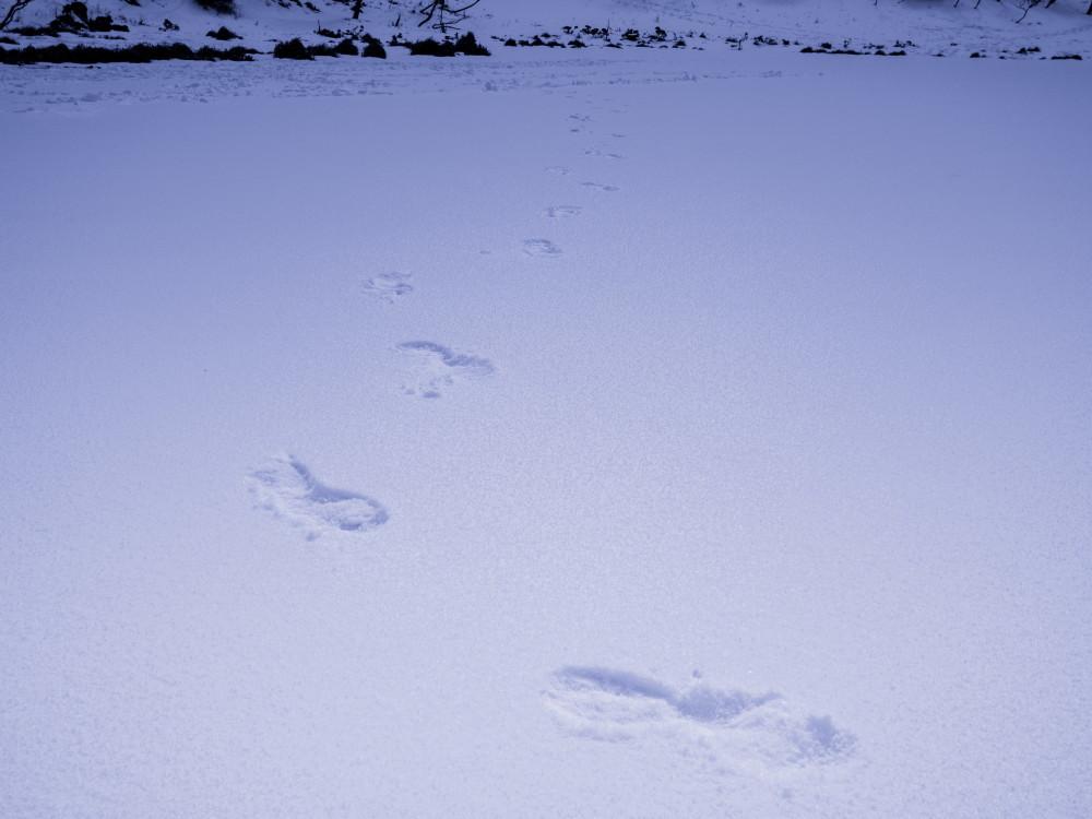 snow hike #7