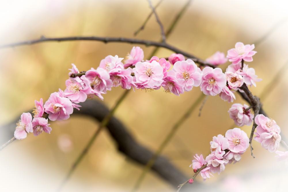 Pink, close up