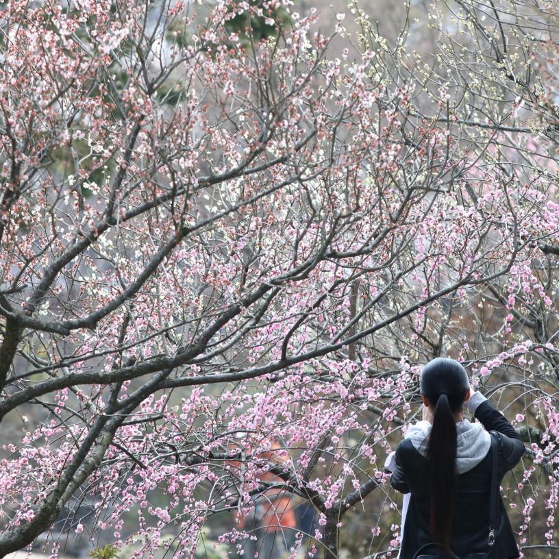 enjoying blossoms #2