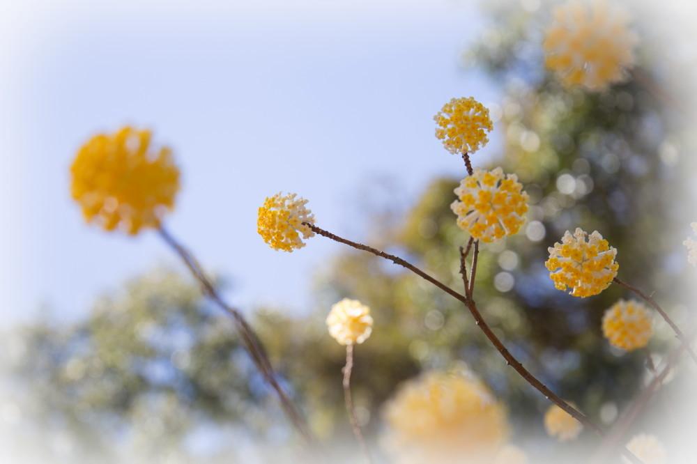 Joy Spring #6