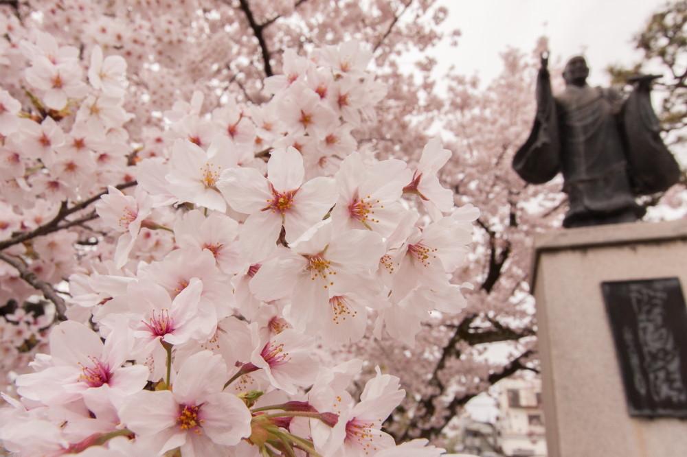 Cherries also bloom underneath the master's feet.