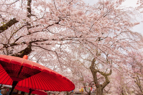 Pink parasol over the red parasols