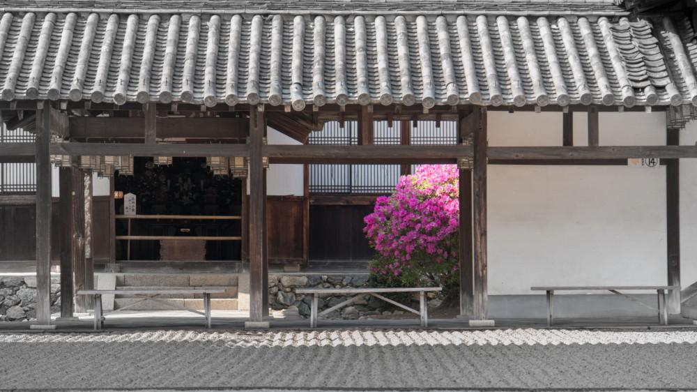 azalea in the temple