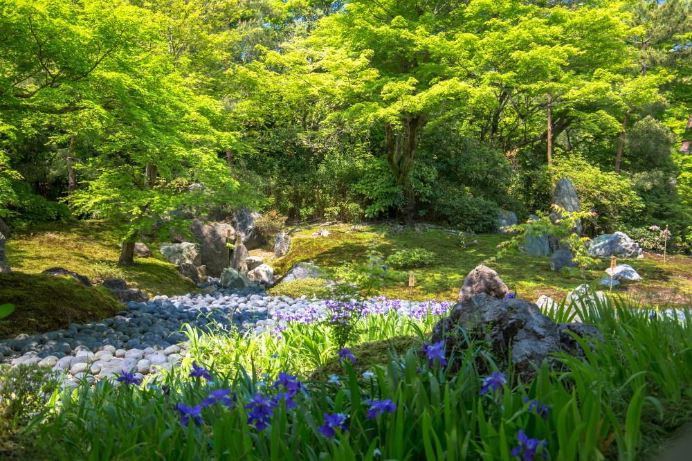 garden of verdure #1