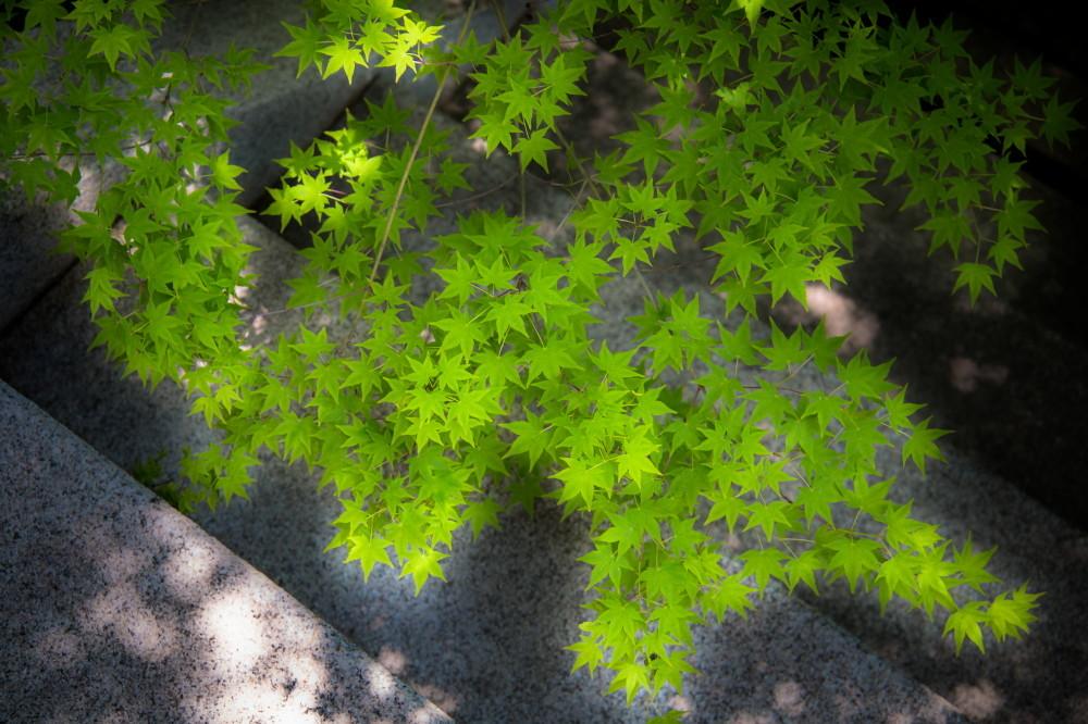 garden of verdure #3