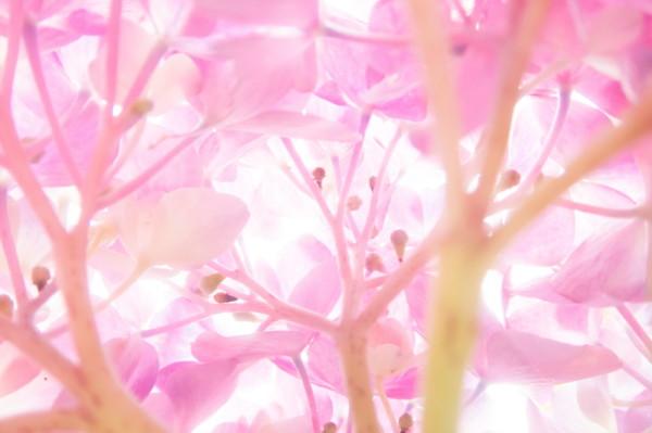 art of hydrangea #4