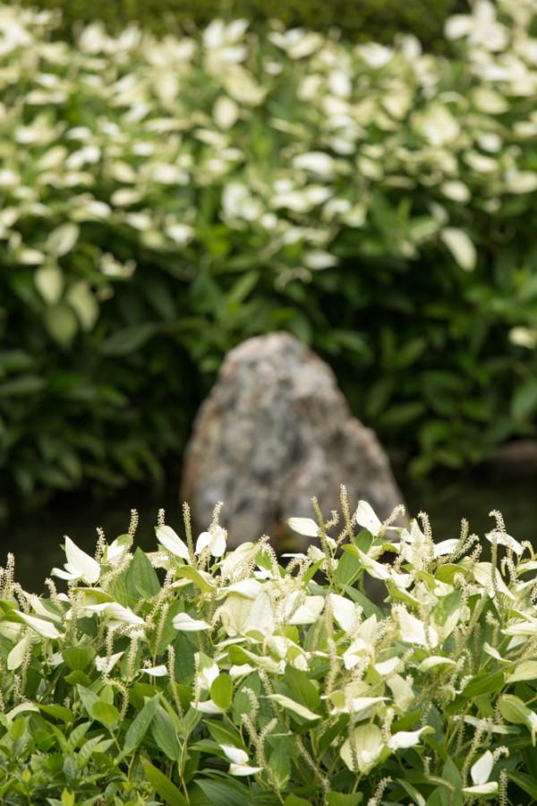 white leaves #4