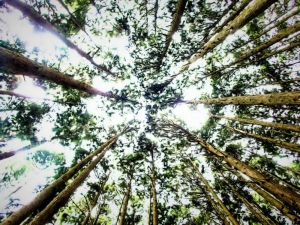 Liquid woods #2