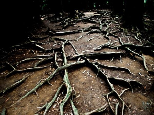 Liquid root