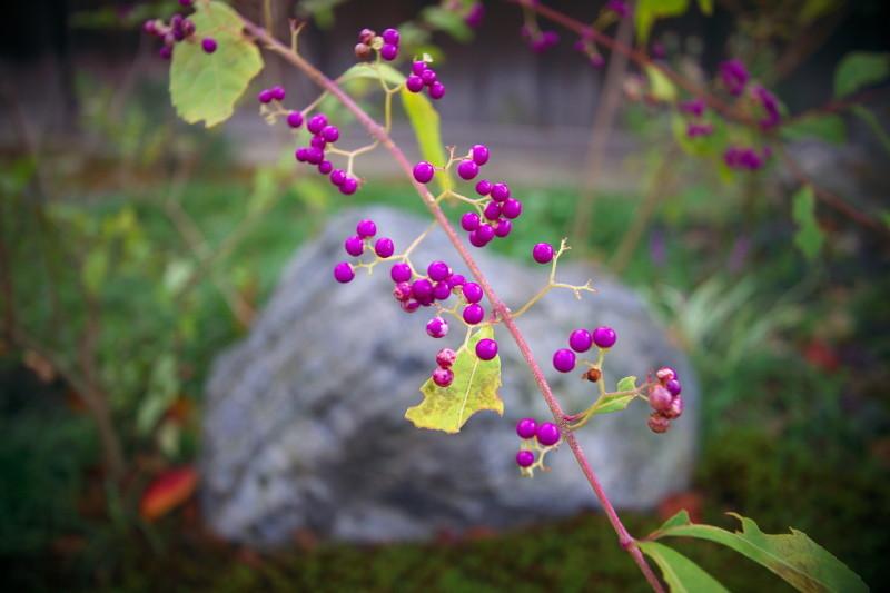 autumn color #1