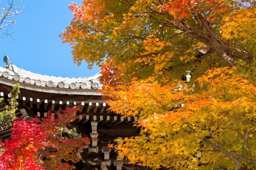 Vibrant autumn #1
