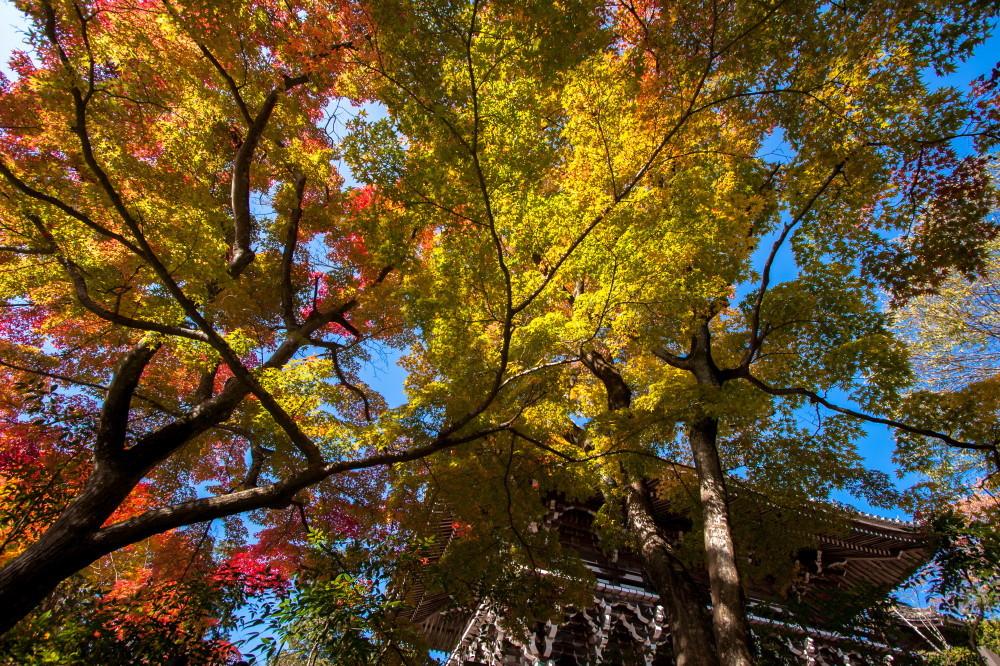 Vibrant autumn #2