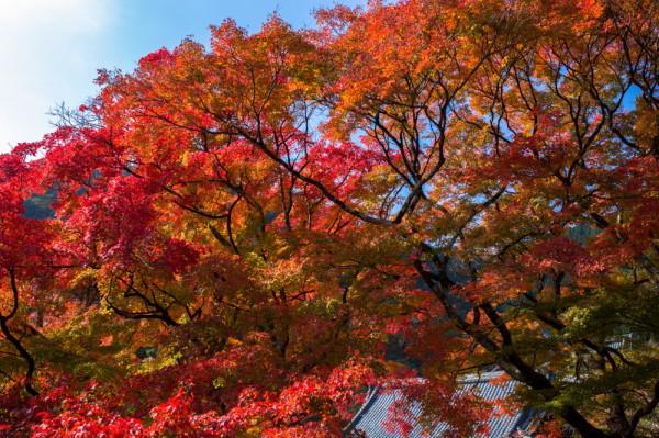 Vibrant autumn #3