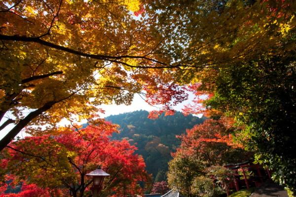 Vibrant autumn #4
