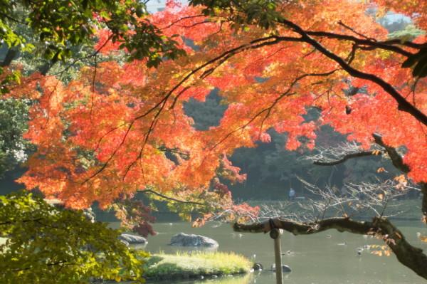 Vibrant autumn #5