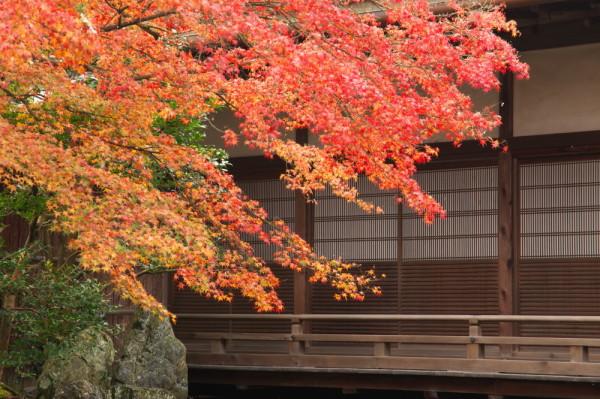 Autumn Splendor #4