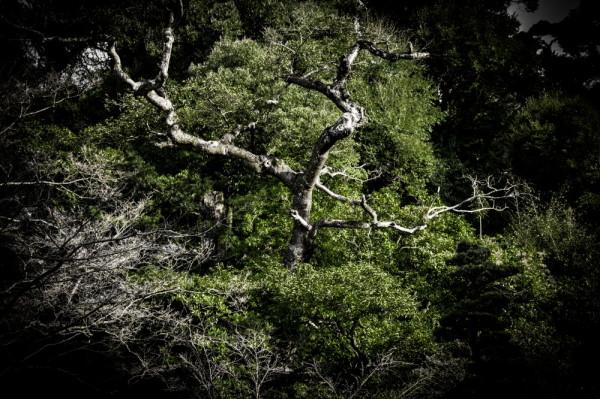 Darkgreen #3
